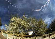 Το άνθος της Apple καλύπτει τη θύελλα Στοκ εικόνες με δικαίωμα ελεύθερης χρήσης