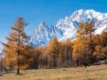 Το δάσος και οι χιονώδεις αιχμές της Mont Blanc το φθινόπωρο Στοκ εικόνα με δικαίωμα ελεύθερης χρήσης