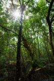Το δάσος μαγγροβίων Στοκ εικόνα με δικαίωμα ελεύθερης χρήσης