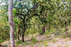 Το δάσος με πράσινο βγάζει φύλλα Στοκ Εικόνες