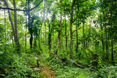 Το δάσος με πράσινο βγάζει φύλλα Στοκ Εικόνα