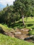 Το δάσος με το κανάλι στοκ φωτογραφία