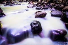 Το δάσος ποταμών στοκ φωτογραφίες με δικαίωμα ελεύθερης χρήσης