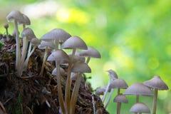 το δάσος που απομονώνεται ξεφυτρώνει λευκό Στοκ εικόνες με δικαίωμα ελεύθερης χρήσης