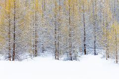 Το δάσος σε γαλλικό Alpes Στοκ εικόνα με δικαίωμα ελεύθερης χρήσης