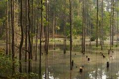Το δάσος στο νερό Στοκ φωτογραφίες με δικαίωμα ελεύθερης χρήσης