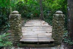 Το δάσος στο πάρκο Khao Luang Naional της Ταϊλάνδης Στοκ Εικόνες