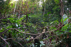 Το δάσος στο πάρκο Khao Luang Naional της Ταϊλάνδης Στοκ εικόνες με δικαίωμα ελεύθερης χρήσης