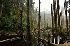 Το δάσος συνεχίζεται για είκοσι μίλια Στοκ Φωτογραφίες