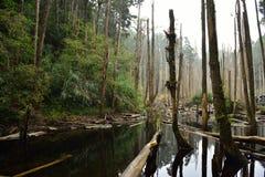 Το δάσος συνεχίζεται για είκοσι μίλια Στοκ φωτογραφία με δικαίωμα ελεύθερης χρήσης