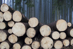 Το δάσος της Misty στοκ εικόνες με δικαίωμα ελεύθερης χρήσης