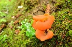 Το δάσος φθινοπώρου είναι στα βουνά Στοκ φωτογραφία με δικαίωμα ελεύθερης χρήσης