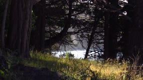 Το δάσος Στοκ εικόνα με δικαίωμα ελεύθερης χρήσης