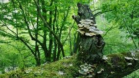 Το δάσος στοκ εικόνες