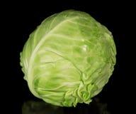 Το άσπρο λάχανο Στοκ Εικόνα