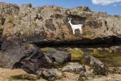 Το άσπρο αρσενικό ελάφι Στοκ Φωτογραφίες