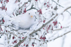 Το άσπρο διακοσμητικό πουλί κάθεται σε ένα δέντρο Στοκ Φωτογραφία