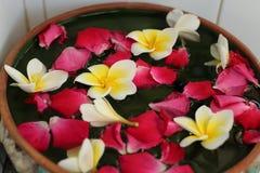 Το άσπρο και κίτρινο λουλούδι Plumeria και ρόδινος αυξήθηκε επιπλέον σώμα πετάλων στο νερό Στοκ φωτογραφία με δικαίωμα ελεύθερης χρήσης