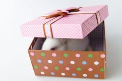 Το άσπρο κουνέλι στο κιβώτιο δώρων στην έννοια Πάσχας Στοκ Εικόνες