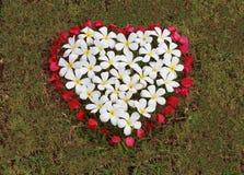 Το άσπρο λουλούδι και το κόκκινο λουλούδι είναι τακτοποιημένη μορφή καρδιών στη χλόη Στοκ εικόνες με δικαίωμα ελεύθερης χρήσης