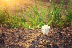 Το άσπρο λουλούδι Στοκ φωτογραφίες με δικαίωμα ελεύθερης χρήσης