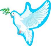 Το άσπρο περιστέρι της ειρήνης, αυτό είναι απομονωμένο απεικόνιση αποθεμάτων