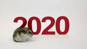 Το άσπρο ποντίκι είναι το σύμβολο του ερχόμενου έτους 2020 ελεύθερη απεικόνιση δικαιώματος