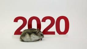 Το άσπρο ποντίκι είναι το σύμβολο του ερχόμενου έτους 2020 απόθεμα βίντεο