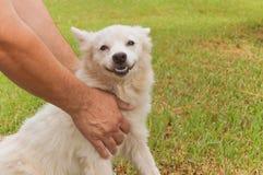 Το άσπρο σκυλί θέτει Στοκ Φωτογραφίες
