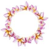 Το άσπρο στρογγυλό έμβλημα πέρα από το ζωηρόχρωμο λουλούδι plumeria απομονώνει στο άσπρο υπόβαθρο Στοκ φωτογραφία με δικαίωμα ελεύθερης χρήσης