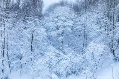 Το άσπρο όμορφο χειμερινό υπόβαθρο των κλάδων των δέντρων στο δάσος ή στο πάρκο κάτω από το χιόνι στοκ φωτογραφία με δικαίωμα ελεύθερης χρήσης