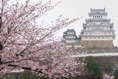 Το άσπρο Castle Himeji Castle στην άνθιση ανθών κερασιών στο πρώτο πλάνο Στοκ Φωτογραφία