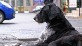 Το άστεγο δασύτριχο σκυλί βρίσκεται σε μια οδό πόλεων στα πλαίσια της διάβασης των αυτοκινήτων και των ανθρώπων φιλμ μικρού μήκους