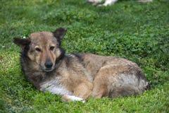 Το άστεγο σκυλί βρίσκεται σε έναν χορτοτάπητα Στοκ φωτογραφία με δικαίωμα ελεύθερης χρήσης