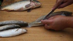 Το άτομο έκοψε επάνω τα ψάρια με ένα μαχαίρι απόθεμα βίντεο