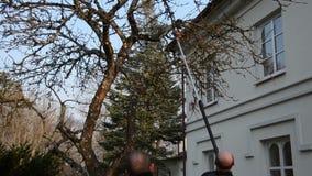 Το άτομο έκοψε τον κλάδο οπωρωφόρων δέντρων μήλων με το ειδικό εργαλείο πριονιών στον κήπο απόθεμα βίντεο