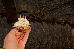 Το άτομο αρχίζει μια βάρκα παιχνιδιών χεριών στο νερό Στοκ φωτογραφία με δικαίωμα ελεύθερης χρήσης