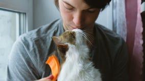 Το άτομο γρατσουνίζει μια άσπρη χτένα γατών, μια γάτα φιλά έναν οικοδεσπότη σε αργή κίνηση απόθεμα βίντεο