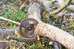 Το άτομο εμπόρων ξυλείας είναι τέμνον ξύλο από το πριόνι Στοκ εικόνα με δικαίωμα ελεύθερης χρήσης