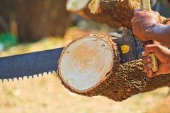 Το άτομο εμπόρων ξυλείας είναι τέμνον ξύλο Στοκ Εικόνες