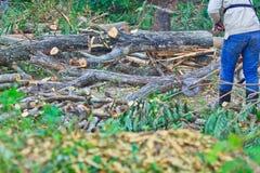 Το άτομο εμπόρων ξυλείας είναι τέμνον ξύλο Στοκ εικόνα με δικαίωμα ελεύθερης χρήσης