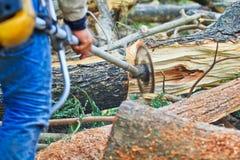 Το άτομο εμπόρων ξυλείας είναι τέμνον ξύλο Στοκ φωτογραφία με δικαίωμα ελεύθερης χρήσης