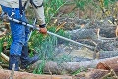 Το άτομο εμπόρων ξυλείας είναι τέμνον ξύλο Στοκ φωτογραφίες με δικαίωμα ελεύθερης χρήσης