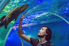 Το άτομο εξετάζει τα ψάρια στο ενυδρείο στοκ φωτογραφία