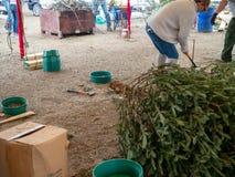 Το άτομο εργάζεται για να εγκαταστήσει τη βάση χριστουγεννιάτικων δέντρων στον έλεγχο της φυσικής αγοράς δέντρων στοκ φωτογραφία