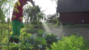 Το άτομο κάουμποϋ καλλιεργητών εφαρμόζει τις χημικές ουσίες στις φυτικές εγκαταστάσεις λάχανων με τον ψεκαστήρα 4K απόθεμα βίντεο