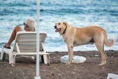 Το άτομο και το σκυλί μαζί στην παραλία Στοκ εικόνες με δικαίωμα ελεύθερης χρήσης