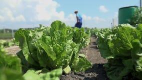 Το άτομο καλλιεργεί το έδαφος για την υγιή σαλάτα λαχανικών απόθεμα βίντεο
