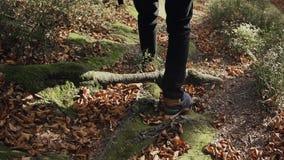 Το άτομο κινηματογραφήσεων σε πρώτο πλάνο Α στα αθλητικά παπούτσια κατεβαίνει από ένα βουνό κάτω από τη δασική πορεία Φθινόπωρο απόθεμα βίντεο