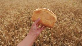 Το άτομο κρατά ένα ψωμί σε έναν τομέα σίτου σε αργή κίνηση βίντεο επιτυχής χρονικός σίτος συγκομιδών πεδίων γεωπόνων χρόνος συγκο φιλμ μικρού μήκους